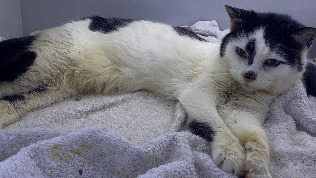 Hilang 11 Tahun, Kucing Bernama Missy Akhirnya Bertemu Pemiliknya