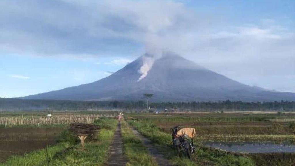 Video Penampakan Awan Panas yang Disemburkan Gunung Semeru