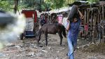 Melihat Lebih Dekat Perawatan Kuda Wisata Ibu Kota