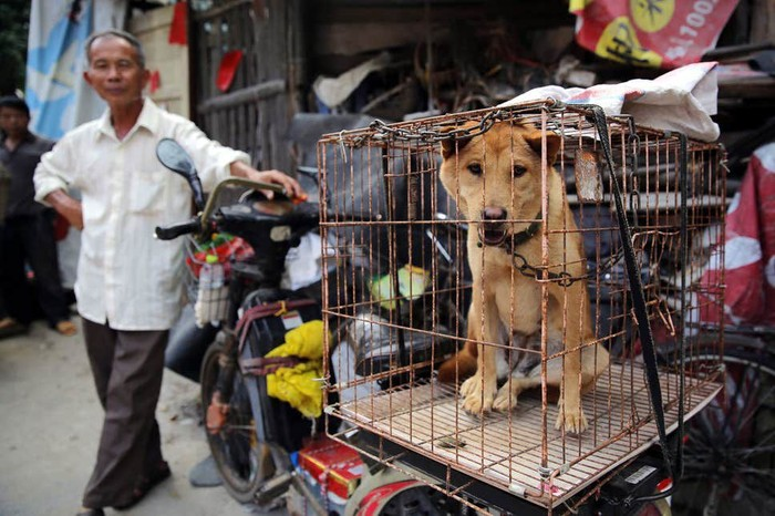 Pasar Chatuchak jual hewan liar