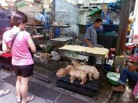 Virus Corona Merebak, Pasar Chatuchak Tetap Jual Daging Hewan Liar