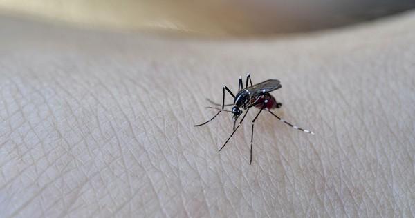 Menurut American Mosquito Control Association (AMCA) jumlah spesies nyamuk lebih dari 3,000 spesies di seluruh dunia. Di Indonesia ada sekitar 457 jenis. (Getty Images/iStockphoto/ruiruito)