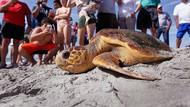 Ilmuwan Ungkap Mengapa Penyu Menyantap Sampah Plastik di Laut