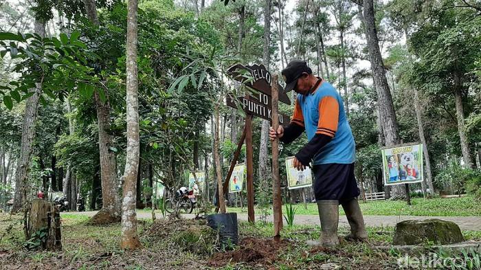 Penanaman pohon di Sumsel dimasifkan karena ada 700 ribu hektare lahan hutan kritis (Raja Adil Siregar/detikcom)