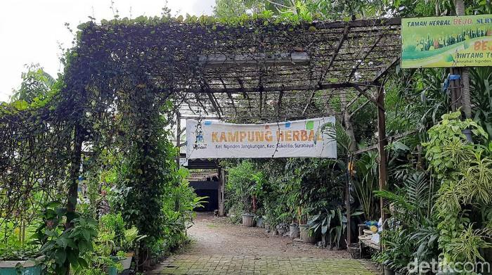 Kampung Herbal Di Surabaya Punya Tanaman Empon Empon Komplit Intip Yuk