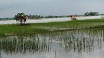 Puluhan Hektare Sawah di Pangandaran Terendam Banjir