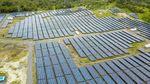 Menengok Kebun Matahari Terbesar di RI