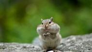 Hari Binatang Sedunia 4 Oktober: Sejarah dan Link Twibbon