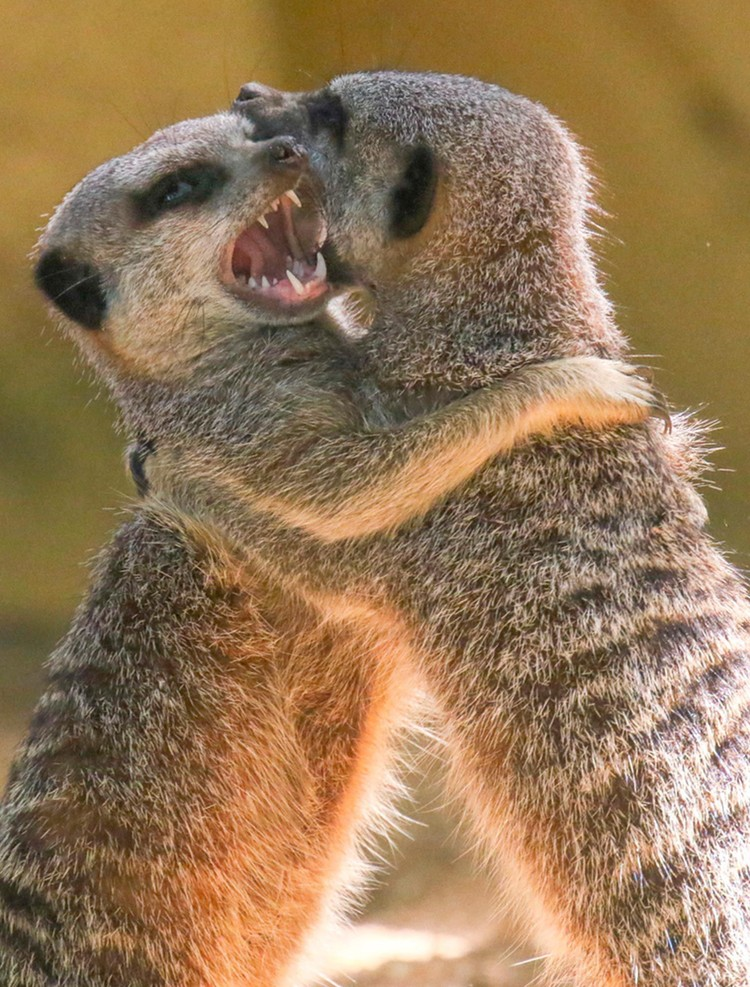 Saat media sosial penuh dengan berbagai intrik dan bahkan hoax seputar virus corona, yuk rehat sejenak dan lihat deretan hewan-hewan lucu ini.