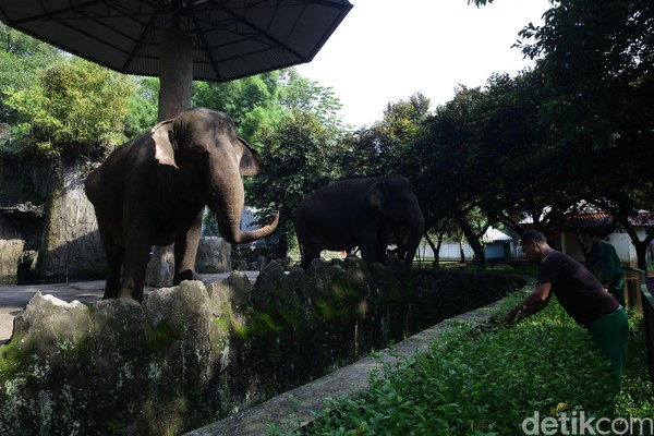 Pemprov DKI Jakarta resmi mengumumkan puluhan destinasi wisata Ibu Kota ditutup sementara. Salah satunya Kebun Binatang Ragunan. Grandyos Zafna/detikcom.