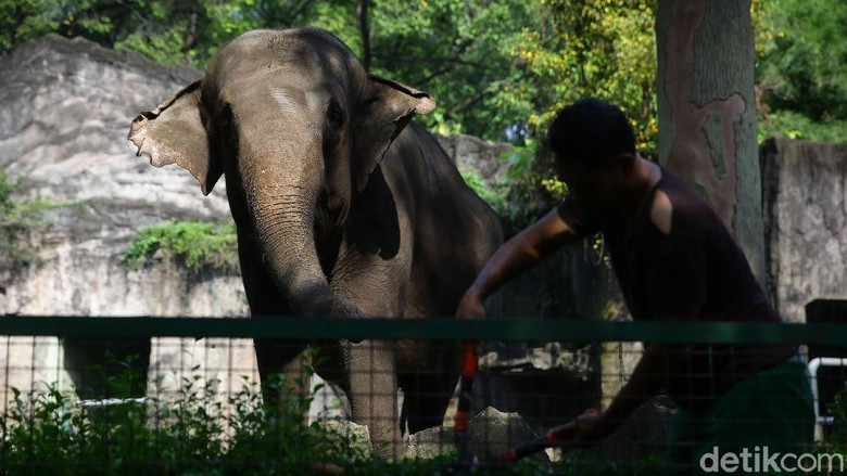 Pemprov DKI Jakarta selama dua pekan ke depan resmi menutup sejumlah tempat wisata di Ibu Kota. Salah satunya Kebun Binatang Ragunan.