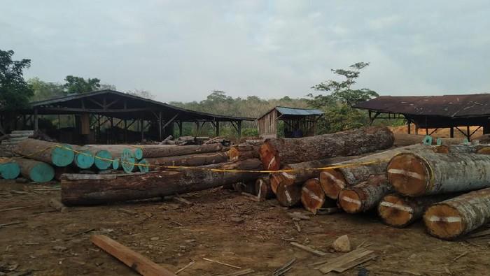KLHK ungkap illegal logging di Sumsel dan Jambi. Tujuh orang dan sediktinya sembilan truk ditahan. KLHK targetkan pengusutan hingga ke pemodal atau cukong (dok. KLHK)