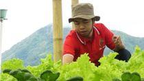Kisah Petani Muda dari Merbabu yang Sukses Bisnis Sayur Organik