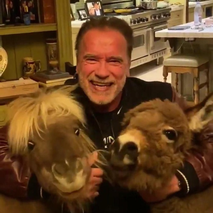 Arnold Schwarzenegger Main Bareng Kuda Poni (Twitter)