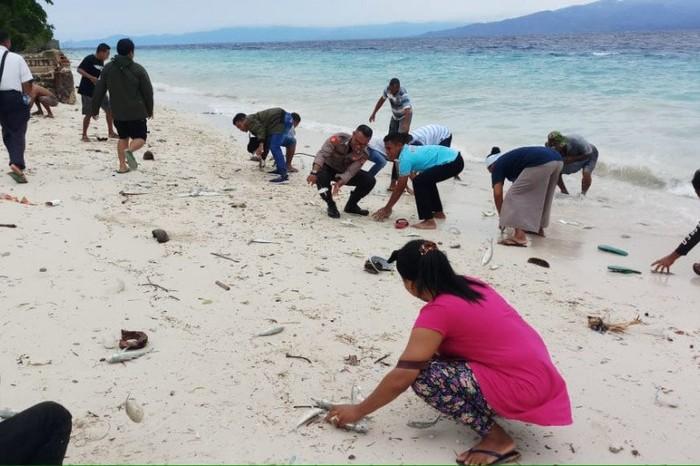 Fenomena ikan-ikan hidup yang terdampar di kawasan pantai Maluku Tengah, Provinsi Maluku. (ANTARA/HO-KKP)