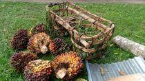 Curi 3 Tandan Sawit, Ibu di Rohul Riau Divonis Bersalah