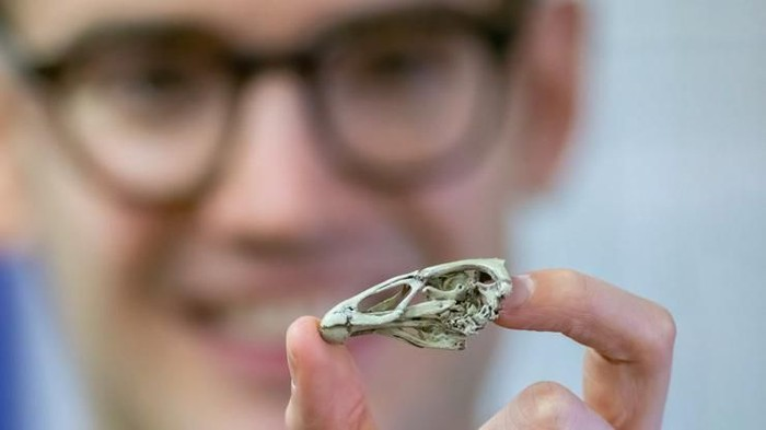 Fosil Ayam Pertama di Dunia