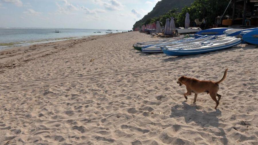 Petugas berjaga di kawasan wisata Pantai Pandawa yang ditutup sementara di Badung, Bali, Sabtu (21/3/2020). Pengelola sejumlah destinasi pariwisata di wilayah Kabupaten Badung seperti Pantai Pandawa, kawasan Garuda Wisnu Kencana, Hutan Kera Sangeh serta Taman Ayun mulai menghentikan operasionalnya sementara sebagai salah satu upaya pencegahan penyebaran COVID-19 atau Virus Corona. ANTARA FOTO/Fikri Yusuf/aww.