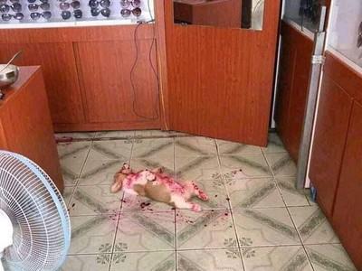 Disangka Mati Berdarah-darah, Ternyata Anjing Ini Kekenyangan Buah Naga