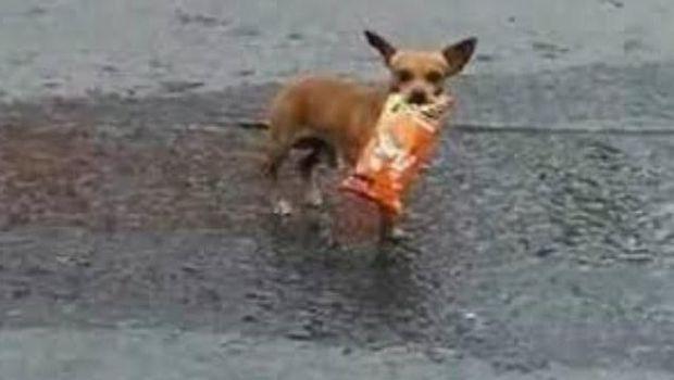 Kocak! Wanita Ini Suruh Anjingnya Beli Camilan di Tengah Karantina Corona