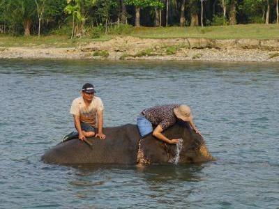 Bertemu Gajah Sumatra Lucu di Bengkulu & Mandi Bareng