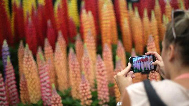 10 Taman Bunga yang Menawan di Seluruh Dunia