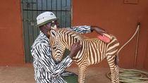Kisah Haru Petugas Konservasi Mamakai Baju Motif Zebra