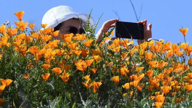 Wildflower di california