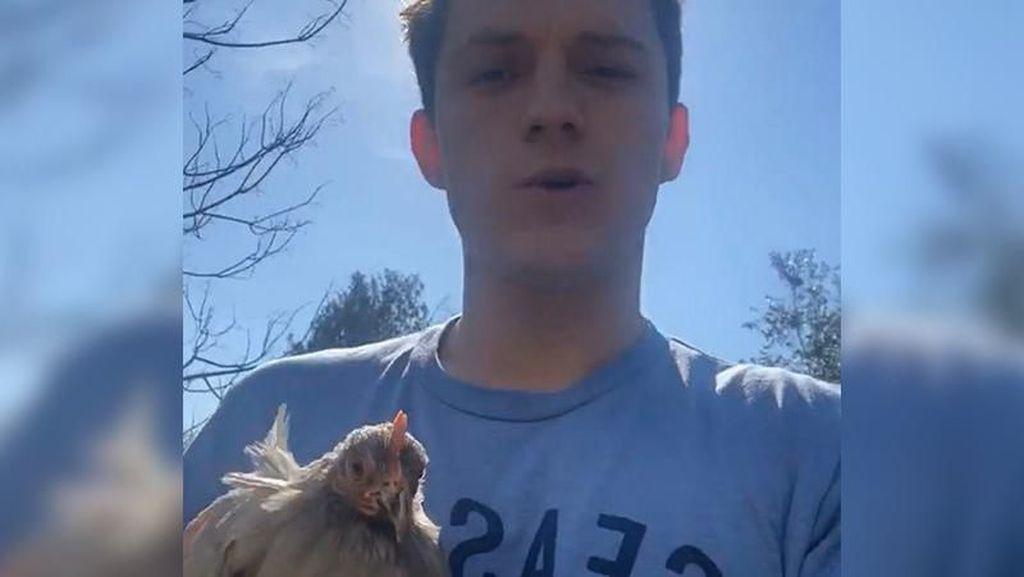 Tak Kebagian Telur, Tom Holland Pilih Pelihara 3 Ekor Ayam