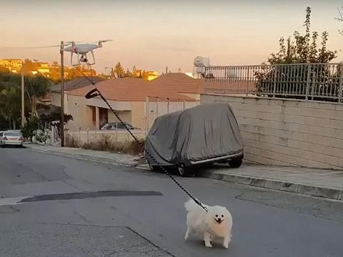 Drone tuntun anjing jalan-jalan di tengah pandemi corona