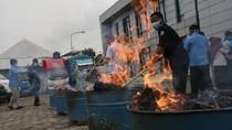 Pemusnahan 50 Kg Ganja Milik Napi di Banten