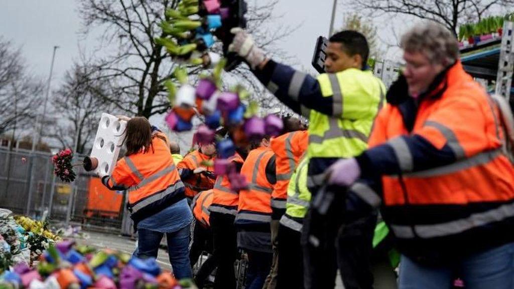Kasihan, Jutaan Tangkai Bunga di Belanda Dimusnahkan Gegara Corona