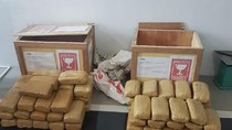 BNN Jabar Bekuk Seorang Kurir Narkoba di Cianjur, 60 Kg Ganja Disita
