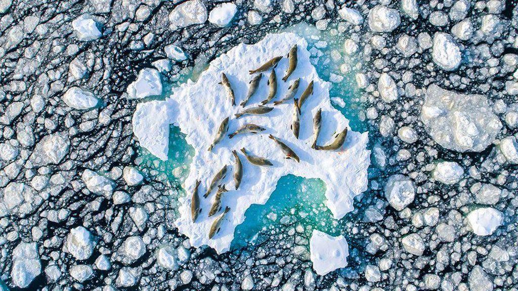 Potret Anjing Laut di Antartika Jadi Foto Terbaik Kompetisi Fotografi Alam