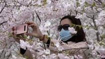 Bunga Sakura Mekar di China, Pertanda Meredanya Virus Corona?
