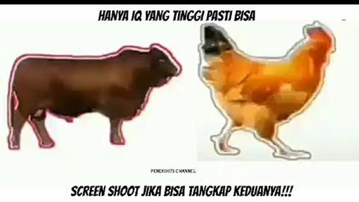Di tengah kebosanan karena terkurung di dalam rumah untuk mencegah penyebaran virus corona, netizen punya berbagai cara untuk menghibur diri. Yang lagi ramai adalah tangkap sapi dan ayam yang merebak di media sosial.