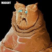 Hewat mikrokopis