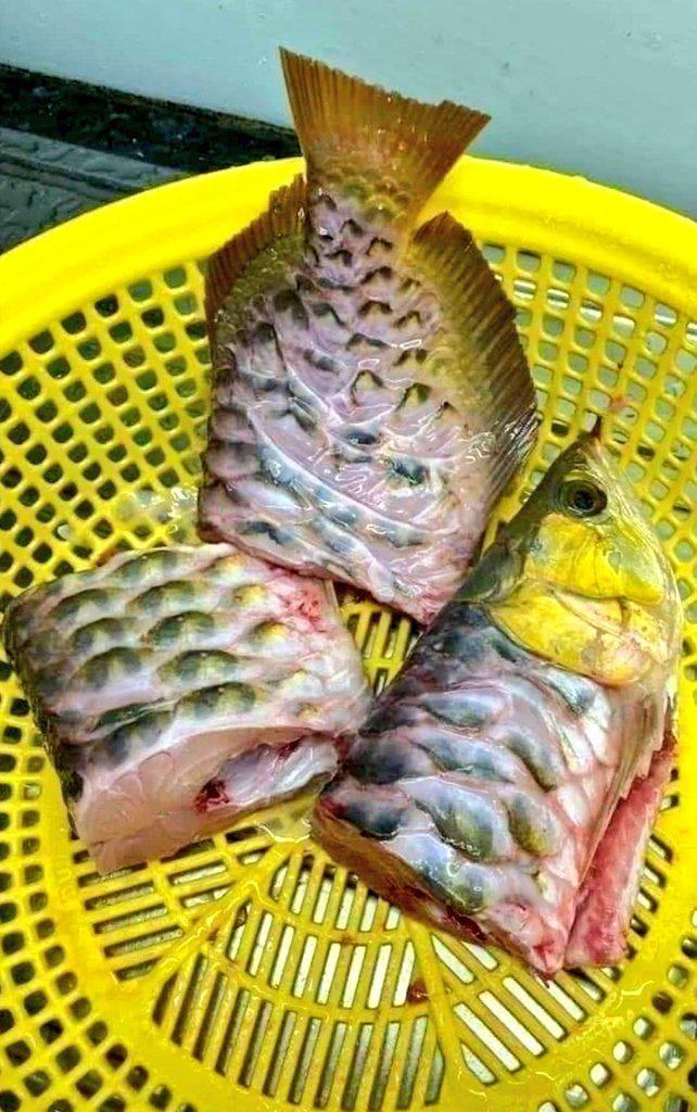 Bikin Netizen Geger, Pria Ini Masak Ikan Arwana Seharga Rp 15 Juta!