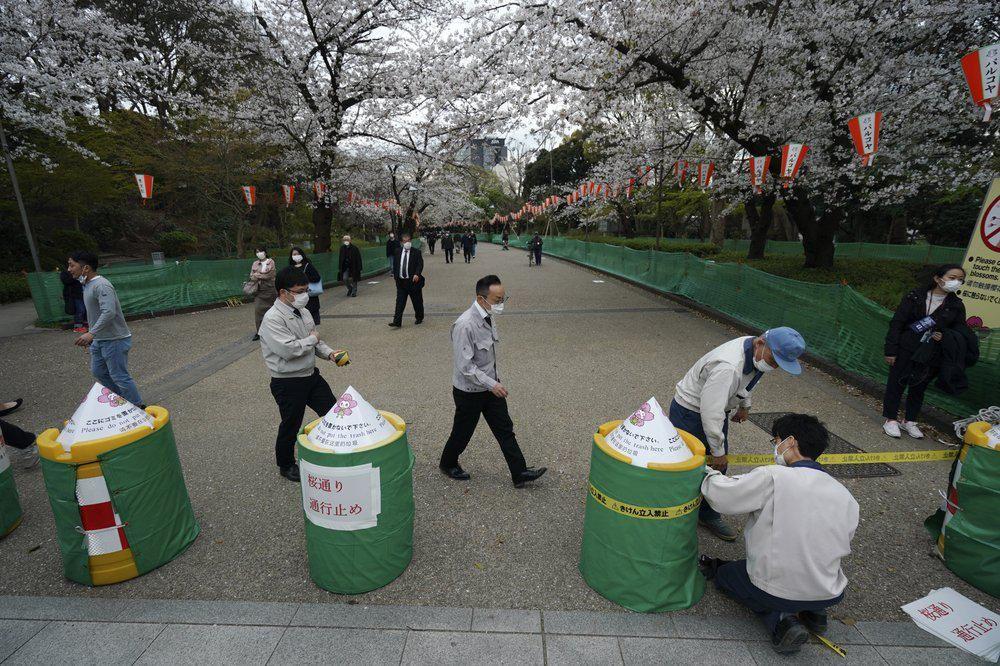 Taman Bunga Sakura di Tokyo Ditutup untuk Cegah Corona