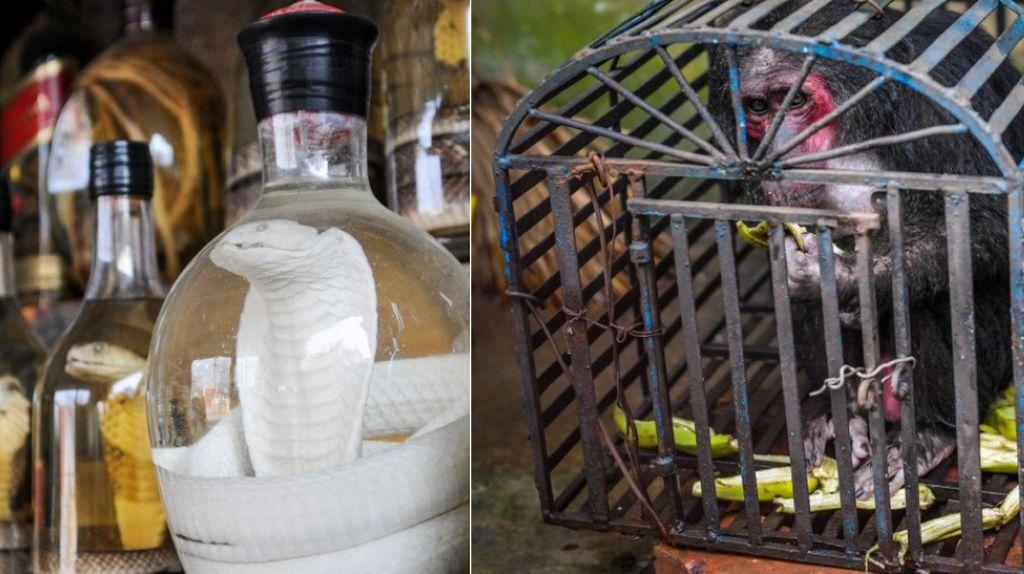 Imbas Virus Corona, Vietnam Akan Larang Perdagangan Daging Hewan Liar