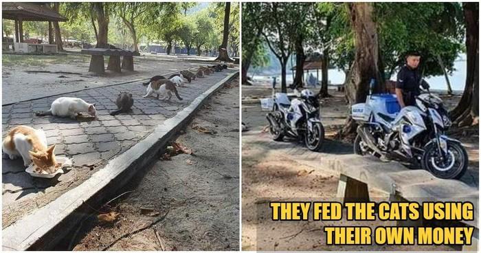 Polisi kasih makan ke kucing jalanan