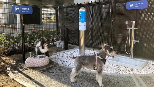 Fasilitas di toilet ini layaknya rest area. Ada tempat air minum, toilet dengan flush, sampai shower! Bagi pemilik anjing yang kesulitan, ada interkom khusus yang akan membantu mereka berhubungan dengan operator. (Osaka International Airport)