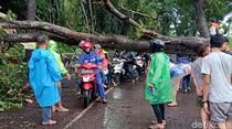 Sejumlah Pohon di Sukabumi Tumbang Diterjang Hujan dan Angin Kencang