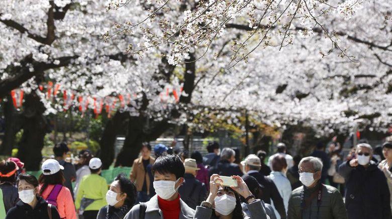 Bunga Sakura bermekaran di kawasan Jepang. Pemandangan bunga Sakura yang bermekaran itu tampak menawan di tengah wabah Corona yang melanda Jepang dan dunia.