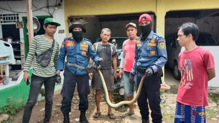Petugas pemadam kebakaran (damkar) mengevakuasi seekor ular sanca di dalam rumah warga di Bojonggede, Kabupaten Bogor (dok. Istimewa)
