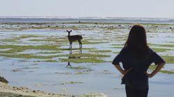 Kangen Traveling? Film Traveling Indonesia Ini Bisa Jadi Obatnya