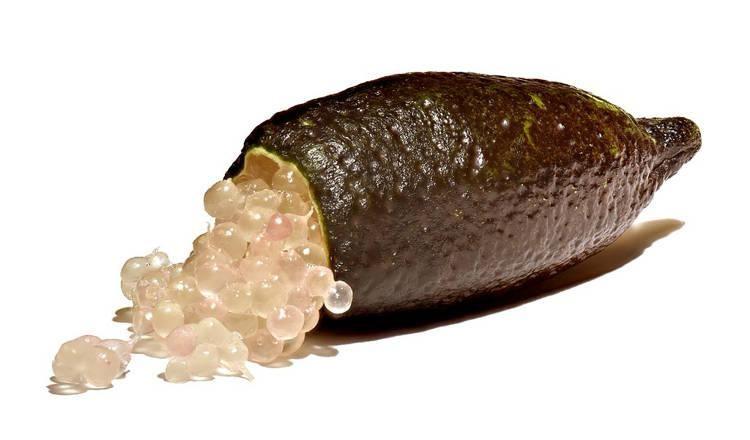 Finger Lime, Jeruk Caviar Langka Seharga Rp 4,8 Juta per Kg