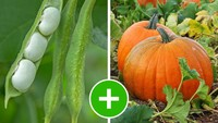 Hobi Berkebun? 5 Jenis Sayuran Ini Bisa Ditanam Bersamaan