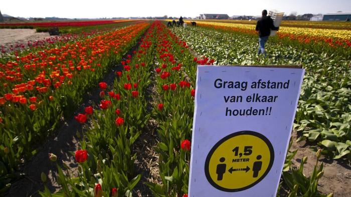 Langkah lockdown untuk memerangi penyebaran virus corona telah diterapkan di sejumlah negara. Termasuk Belanda. Apakah Indonesia akan menerapkan sistem seperti Belanda?