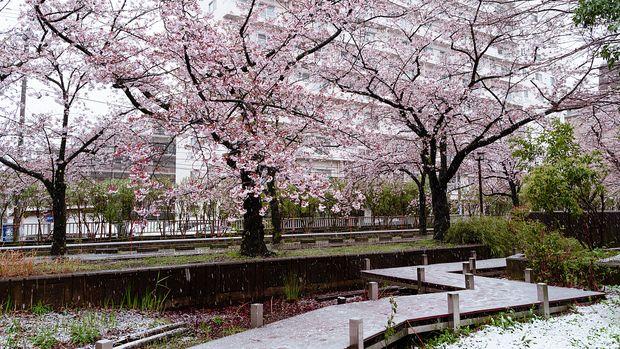 Salju turun di Tokyo akhir bulan Maret